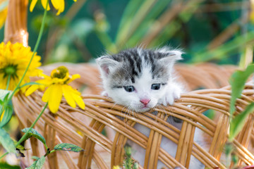 Cute little kitten sitting in a basket on floral lawn