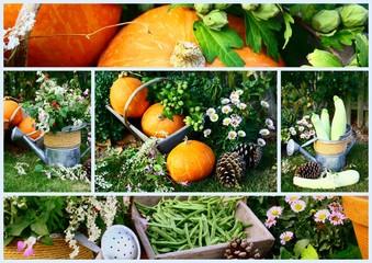 composition,légumes d'automne au jardin