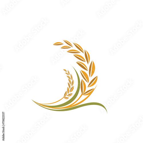rice vector - 70622337