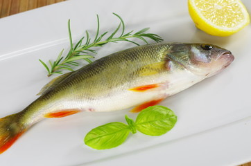 fresh fish with rosemary