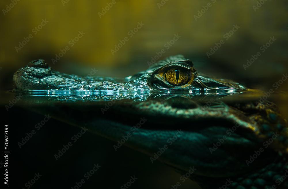 cr dence de cuisine en verre imprim crocodile alligator close up nikkel. Black Bedroom Furniture Sets. Home Design Ideas