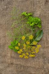 Укроп, петрушка и лист хрена