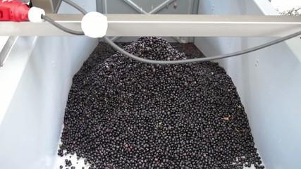 raisins éraflés
