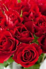 Bunch of bright red roses, close up