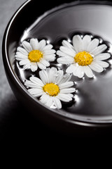 Daisies in bowl of water, spa concept
