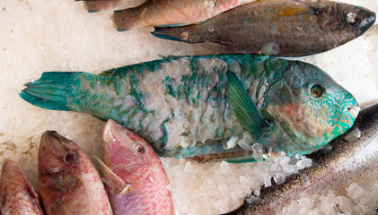 Fish on market stall, London. Includes turquoise parrotfish.