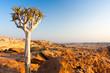tree sunset africa
