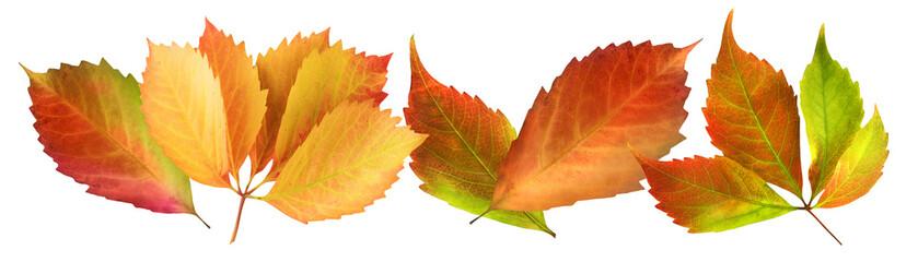 Herbst - Blätter