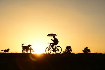 bisiklet peşinden giden köpekler