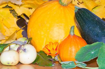harvested hokkaido pumpkins, apples, zucchini and nasturtium