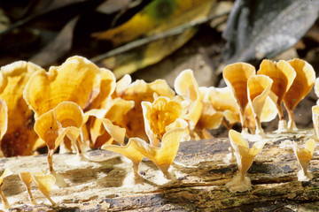 funghi saprofiti parassita vecchie piante foresta lobeke camerun