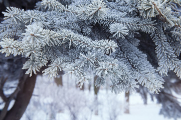 Christmas tree background snowy
