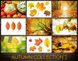 Autumn Collection 1