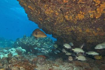 Tropical Coral Reef