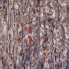 Texture écorce de bois - Vintage