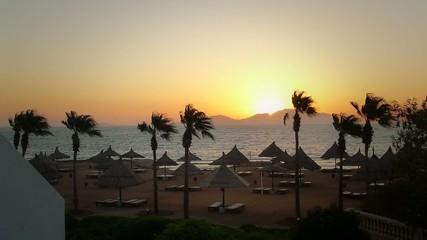 rising sun, sea, palm, island, beach