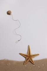 Estrella de mar y caracola