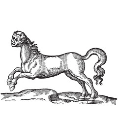 Horse with human head