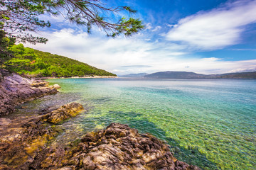 Beach scenery with pine tree in Croatia, Istria, Europe