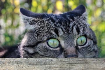 Überraschter Katzenblick