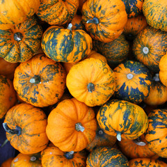 Heap of tiny spotted pumpkins. Background
