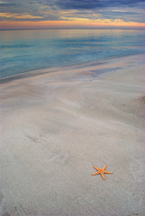 Starfish on a Beach in Cuba