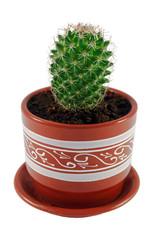 Зеленый кактус в коричневом горшочке