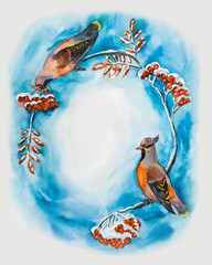 Frame from waxwings. Two birds eating mountain ash. Winter.