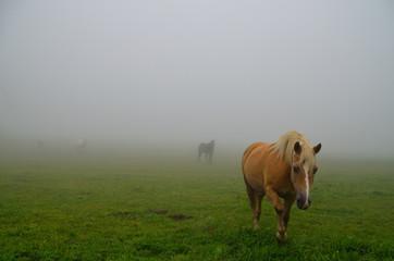 pferde erscheinen bei nebel