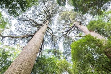 市房山の森の中の市房杉