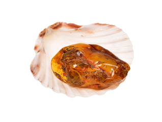 piece of baltic amber on seashell isolated on white background