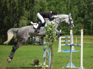 Dapple gray horse and rider at jumping show