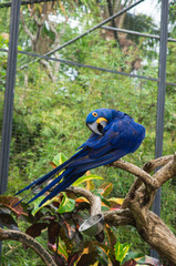 Bright blue parrot in tropical park