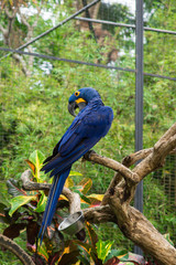 Bright blue parrot on a branch of a tropical tree