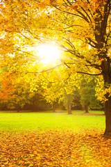 sonniger Herbsttag geht zu ende