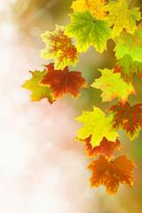 Herbst 42