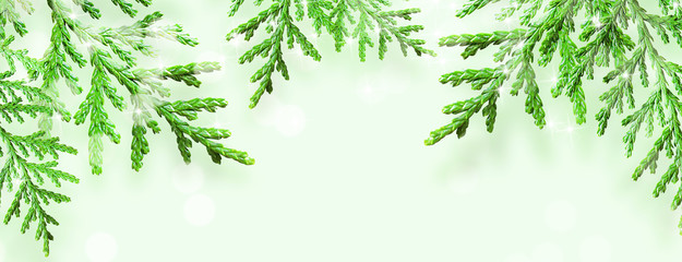 Christmas tree branches with stars on green background