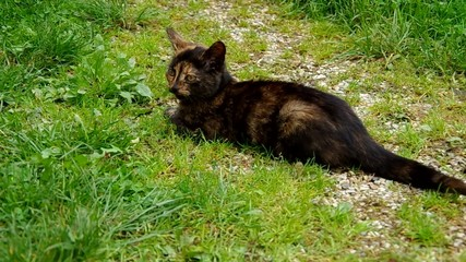 Mottled black cat lying on green grass
