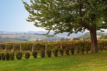 Costigliole d'Asti, Asti, Piedmont, Italy