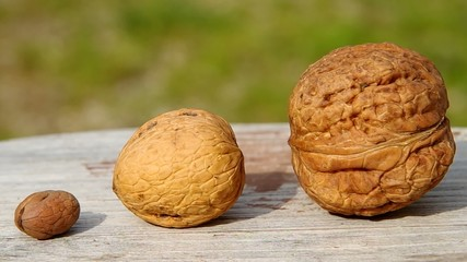 Small, large and largest, walnuts on wooden table