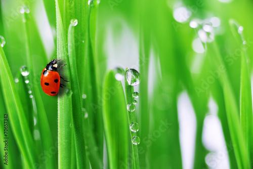 green grass - 70657342