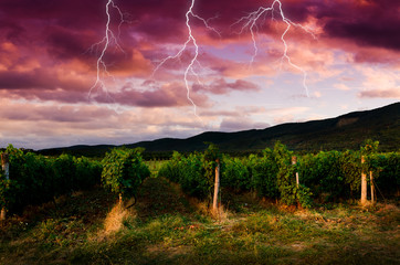 Thunderstorm with lightning in grape field.