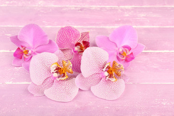 Pink tropical orchid flowers on color wooden background