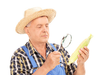 Mature farmer examining maize through a magnifier