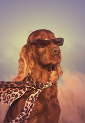Funny dog portrait - in a vintage style