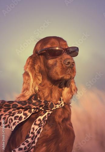Foto op Aluminium Dragen Funny dog portrait - in a vintage style