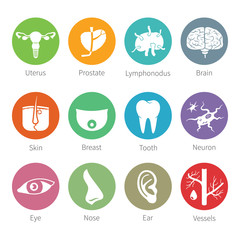 Vector icon set of human organs