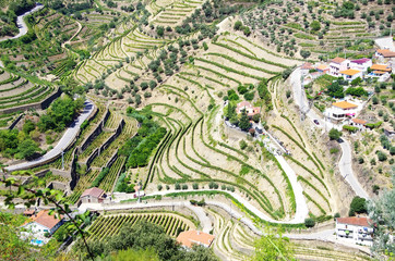view of the famous vineyards of Porto wine