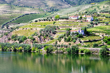 Valley of the River Douro, Portugal