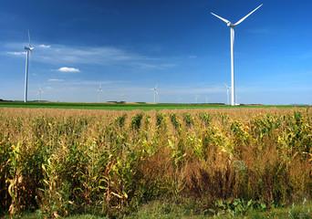 Eoliennes dans un champ de maïs